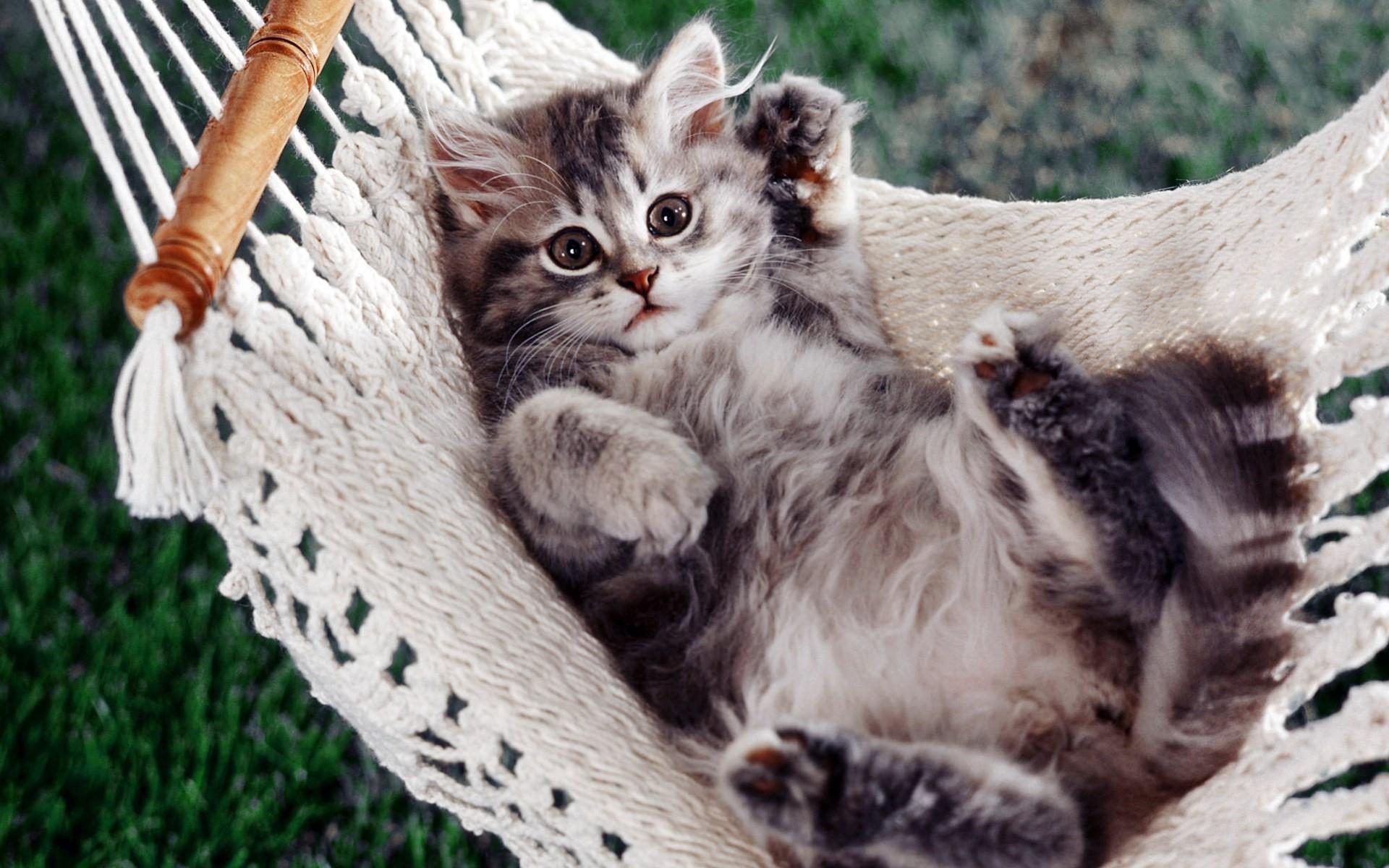 site de rencontre jeune adulte gratuit rencontre chat adulte et chaton