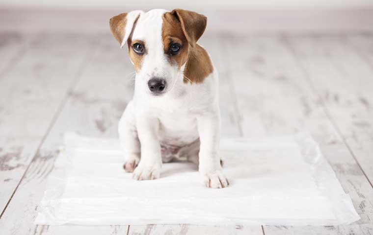 Fiche Chien N° 02. Mon chien – son éducation | Clinique