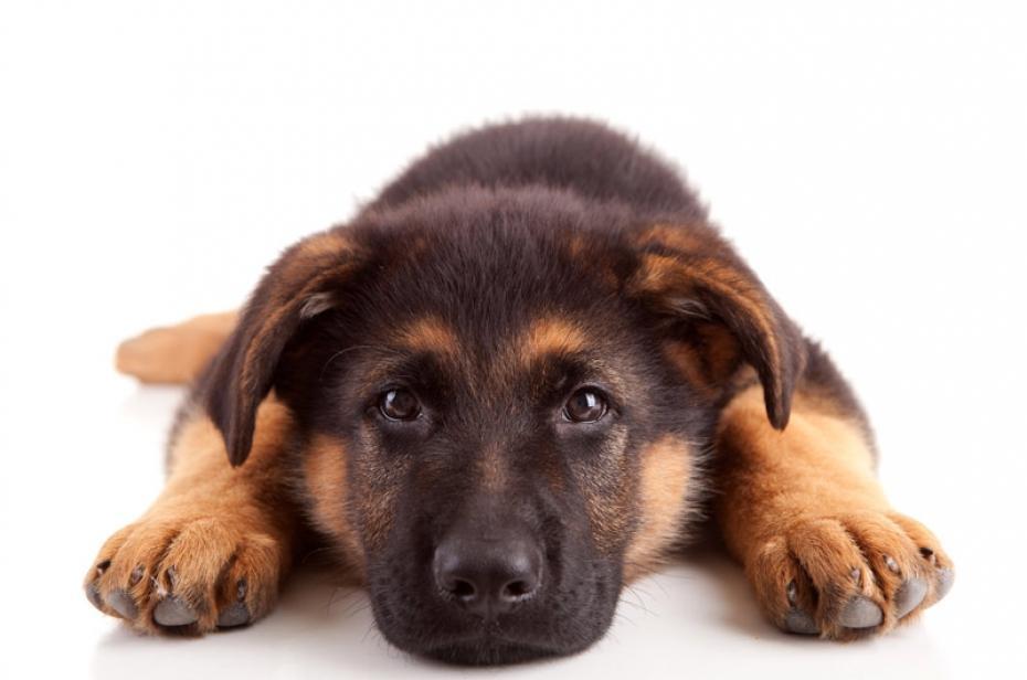 Fiche Chien N° 09. Mon chien âgé | Clinique Vétérinaire